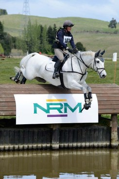 Balmoral Sensation produced to 3*** eventing and Level 5 Dressage