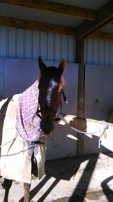 Meet Alfie, TB by Align