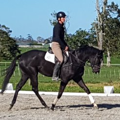 DSE Palpitation. Roz is a sassy and elegant black! By same sire as DSE Presley and DSE Lanikai.Mare. She's athletic, sharp, and very scopey over a fence. Don't expect to see her out soon though when you do you will all fall in love